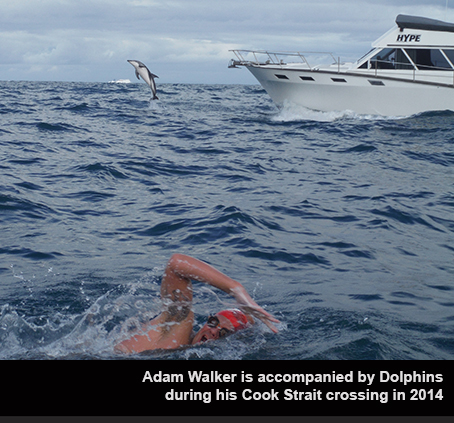 Adam Walker swims with Dolphins
